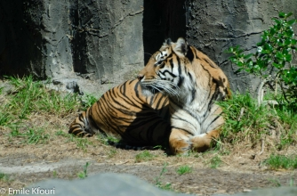 zoo-20170528-251.jpg
